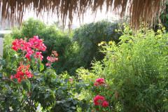 Cabo-Pulmo-garden