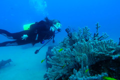 Gorgonia Diver